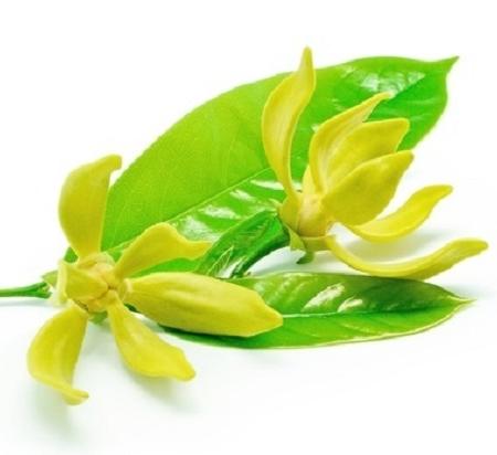 Ylang Ylang bloem