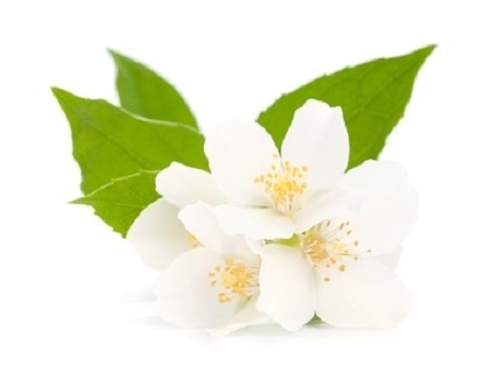 Jasmijn bloemen